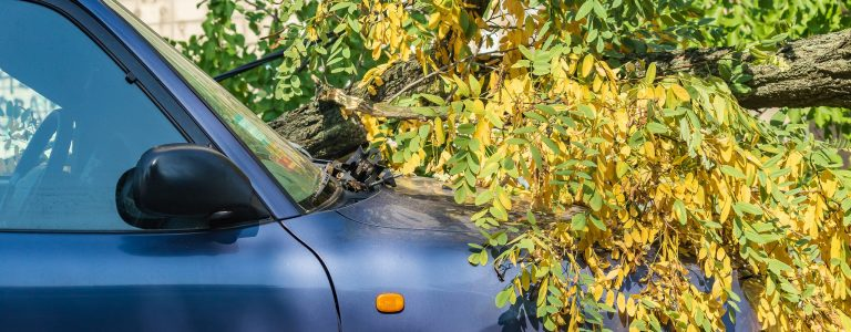 A very large broken tree fell on a car during a hurricane. Destruction after a gale. Accident. Close-up. Summer.